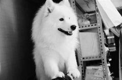 白颜色的狗有哪些